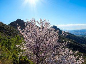 A few almond trees were even in bloom