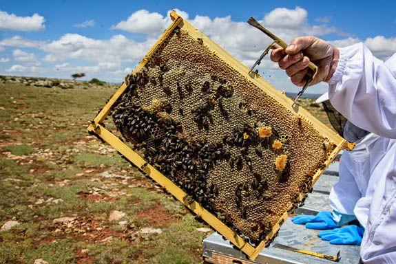 A nice slice of bee hive