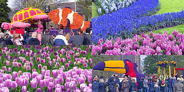 Dutch tulip flower events in Holland
