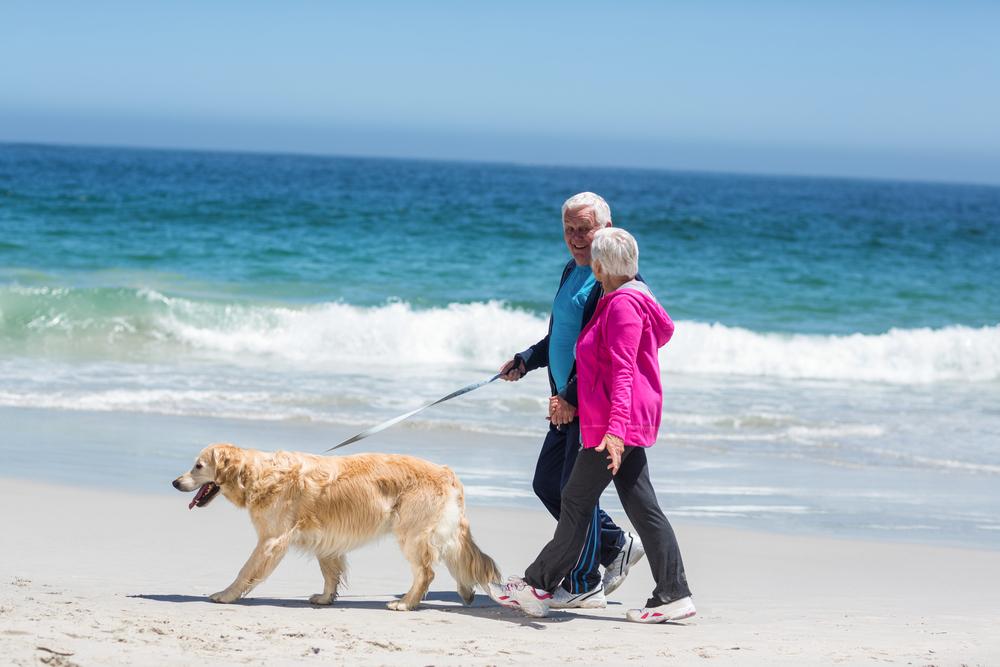 Senior couple walking a golden retriever on a beach