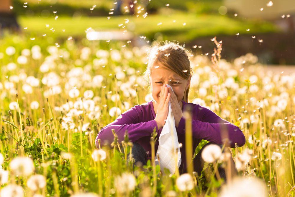 allergy hay fever