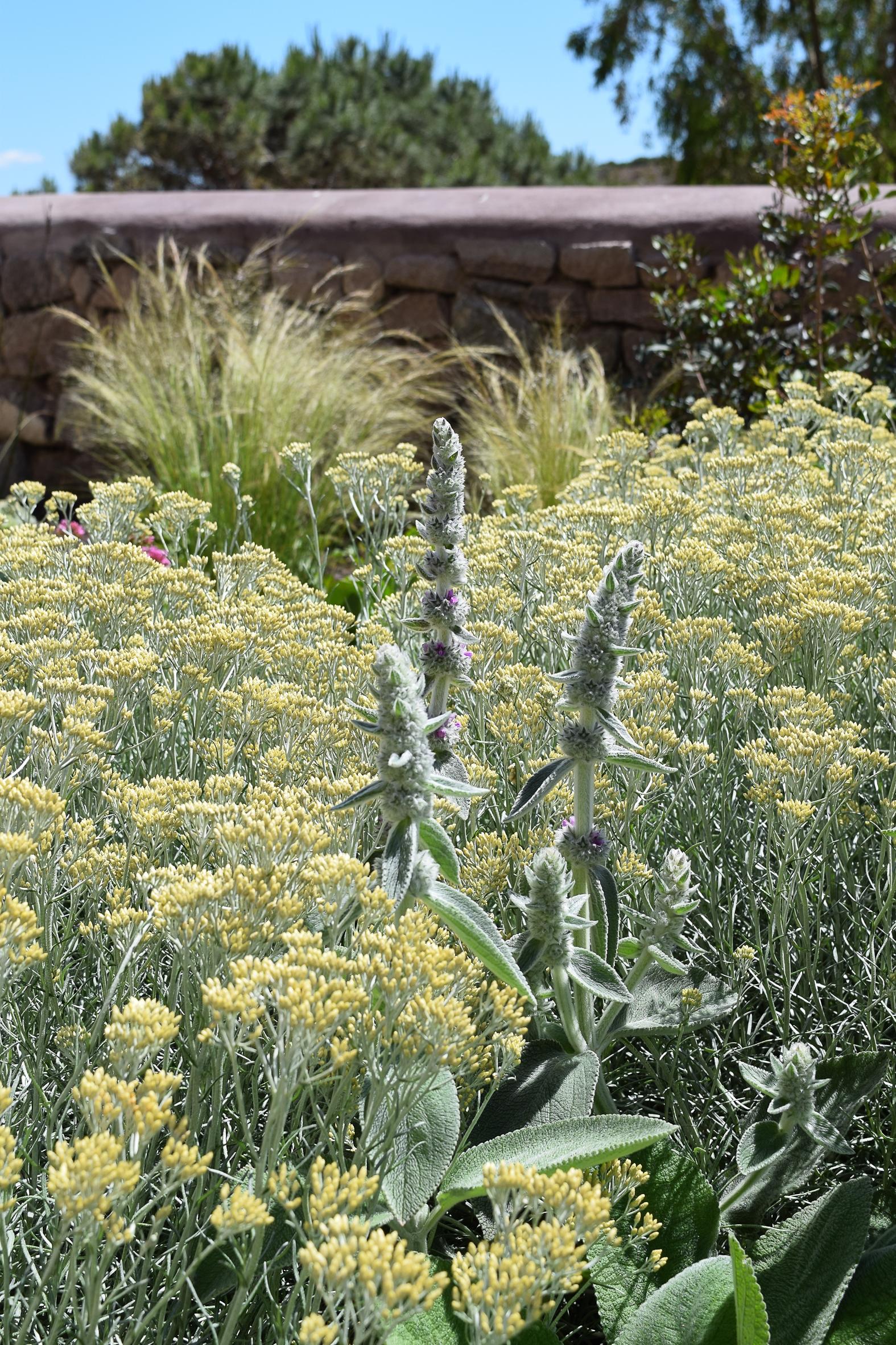 anna piussi garden design tuscany garden services landscape
